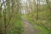 Gaer Fawr Woodland Walk