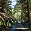 Woodland track, Glen Mooar