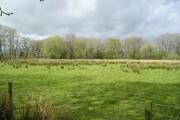 Unimproved Grassland
