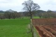 Farmland, Hayton