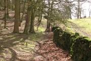 Woodland, Irton Pike