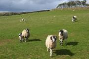 Pasture, Renwick
