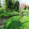 Tapton Grove Brook