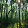 Woods near Bishop Burton