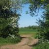 Track through gap between hedge and trees near Akenham