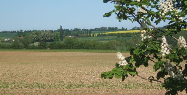 Large field west of Akenham Hall, looking ENE