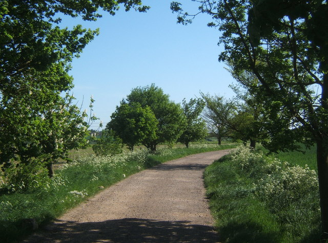 Track heading south from Bower Farm