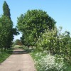 Track towards Bower Farm, Akenham