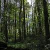 Coed Trefeilir Woods