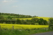 Rape crops from Scrooby Lane