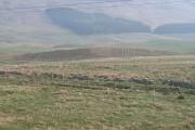 Newly planted woodland, Glen Quaich