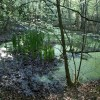 Pond near Decoy Lake