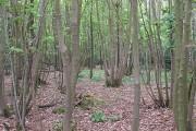 Polmaise Wood