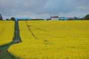 Farmland near Crossford