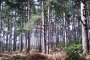 Ivyhole Hill Wood
