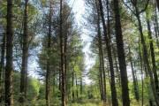 Woodland above Ashcombe
