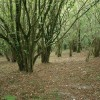 Woodland, Ball Hill