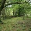 Woodland boundary, Ball Hill