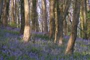 Coed Cefn woods above Crickhowell