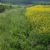 Bridleway to Adisham