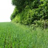 Farmland in the Severn Vale