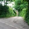 Lane leading to Moyson