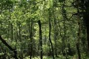 Yarner Wood