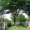 Allenvale cemetery (north) - west end.