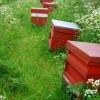 Fieldside hives near Arram