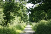 Clanger Wood