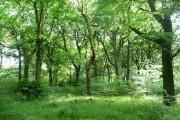 Low Wood, North Bierley