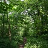 Woodland path near River Doe