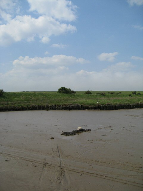 The banks of the Butley River