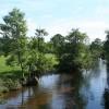 Uffculme: the river Culm