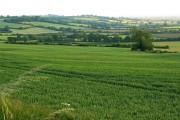Farmland, near Catcomb