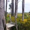 Lower Clashmore Wood near Walled Fields