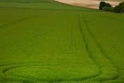 Farmland near Avebury