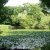 Shirley Pond, Southampton