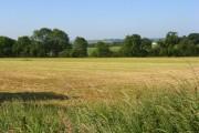 A mown hay meadow, Woodborough