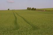Farmland, Alton Barnes