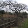 Oak Tree, Carway to Trimsaran road