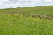 Grassland, Bathville
