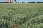Shaftholme farmland