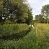 River Gipping downstream of Needham Market