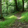 Woodland in the Habberley Valley Nature Reserve