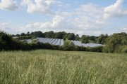 Wheatfield with polytunnels