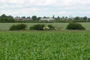 Farmland near Rothley