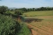 Field near Broadhempston