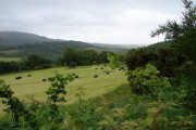 Millbank Hill