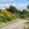 Lane, North Brora Muir